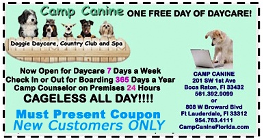 4-6 week dog grooming discount coupons
