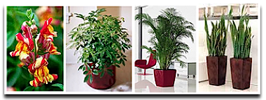 fascinating 25 tropical office plants design inspiration of
